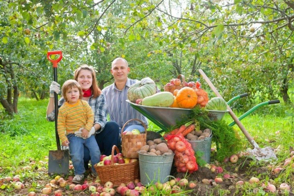 Магазин товаров для сада и огорода Урожайная грядка Изображение 4